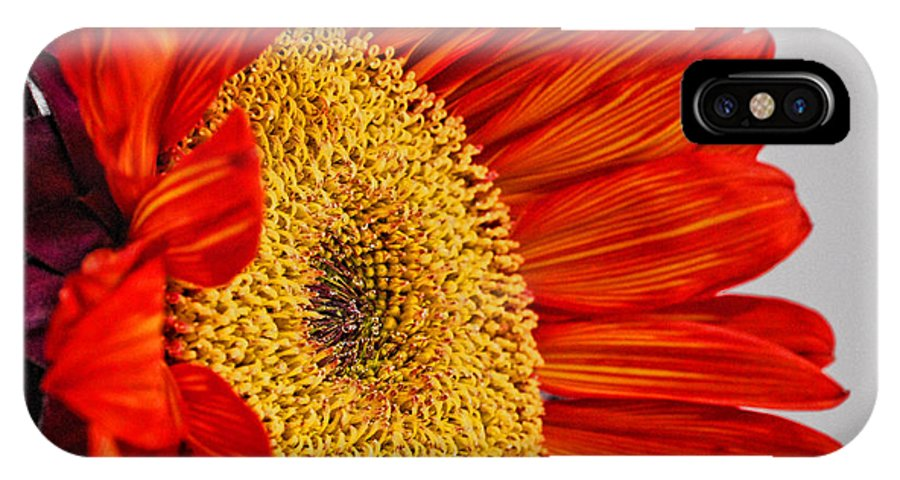 Red Sunflower IPhone X Case featuring the photograph Red Sunflower V by Saija Lehtonen