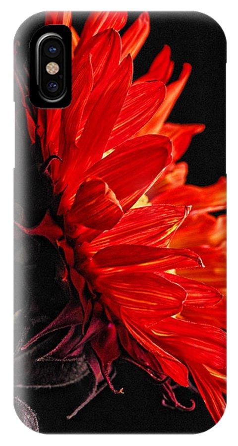Red Sunflower IPhone X Case featuring the photograph Red Sunflower Vi by Saija Lehtonen