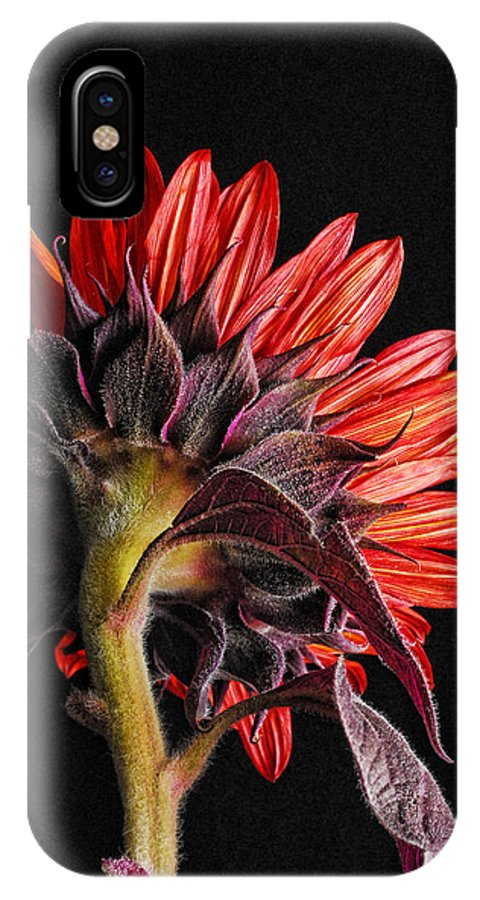 Red Sunflower IPhone X Case featuring the photograph Red Sunflower X by Saija Lehtonen