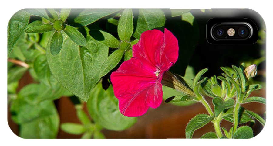 Red IPhone X Case featuring the photograph Red Velvet Petunia by Douglas Barnett