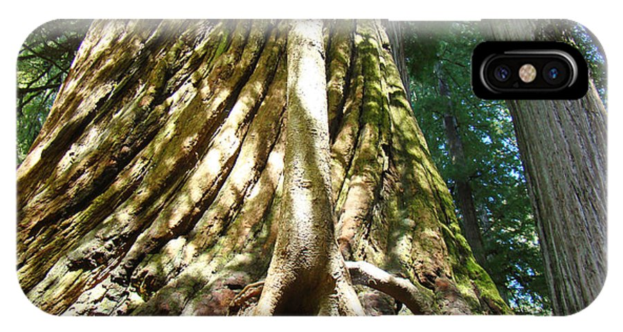 Redwood IPhone X Case featuring the photograph Redwood Trees Forest Art Prints Redwoods by Baslee Troutman