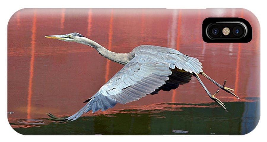Great Blue Heron IPhone X Case featuring the photograph Reflections Of Russet by Fraida Gutovich