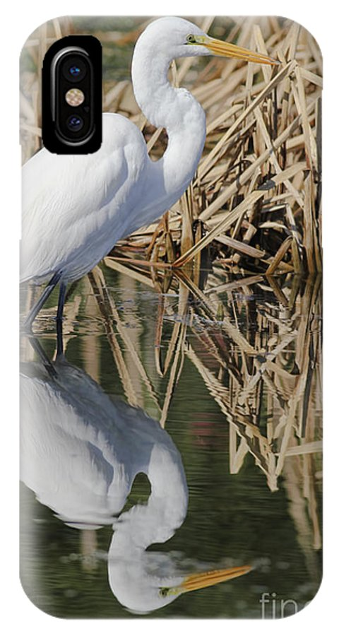 Wildlife IPhone X Case featuring the photograph Reflective Day by Deborah Benoit