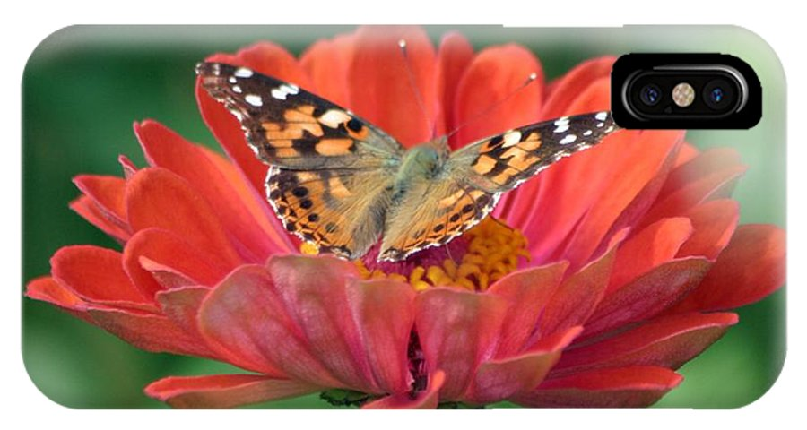 Butterfly IPhone X Case featuring the photograph Resting Area by Living Color Photography Lorraine Lynch