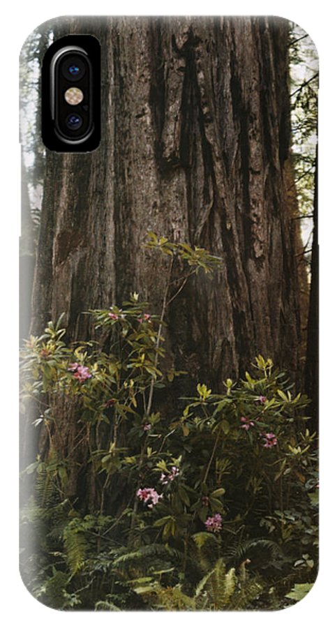 Day IPhone X / XS Case featuring the photograph Rhododendrons Bloom Around The Trunk by Charles Martin