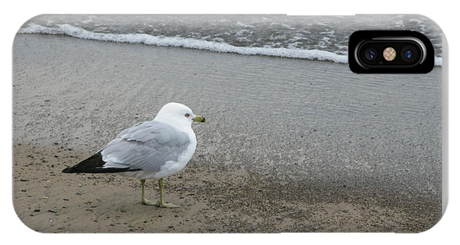 Ring-billed Gull IPhone X Case featuring the photograph Ring-billed Gull by Ann Horn