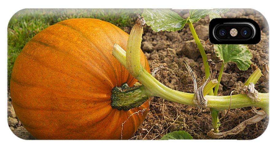 Pumpkin IPhone X Case featuring the photograph Ripe Pumpkin by Louise Heusinkveld