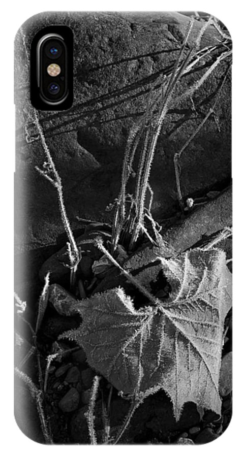 Blank And White IPhone X Case featuring the photograph River Bed Sycamore Leaf by Michael Dougherty
