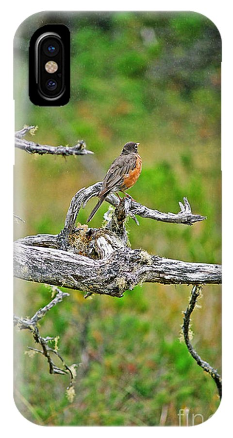 Robins IPhone X / XS Case featuring the photograph Robin by Randy Harris