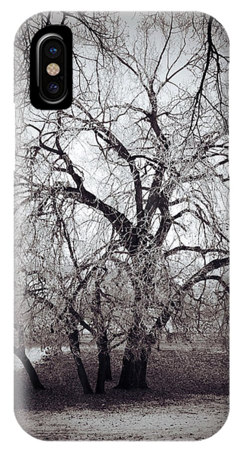 Elm Framed Prints Framed Prints IPhone X Case featuring the photograph Roots And Flutes by The Artist Project