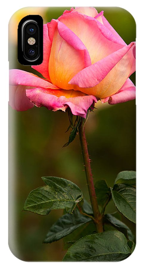 Rose IPhone X Case featuring the photograph Rose by Paul Mangold