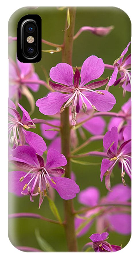 Chamerion Angustifolium IPhone X Case featuring the photograph Rosebay Willowherb by Bob Gibbons
