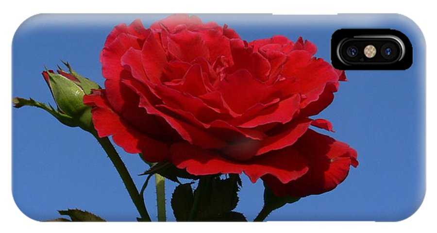Rose IPhone X Case featuring the photograph Rosie Skies by Kevin Fortier