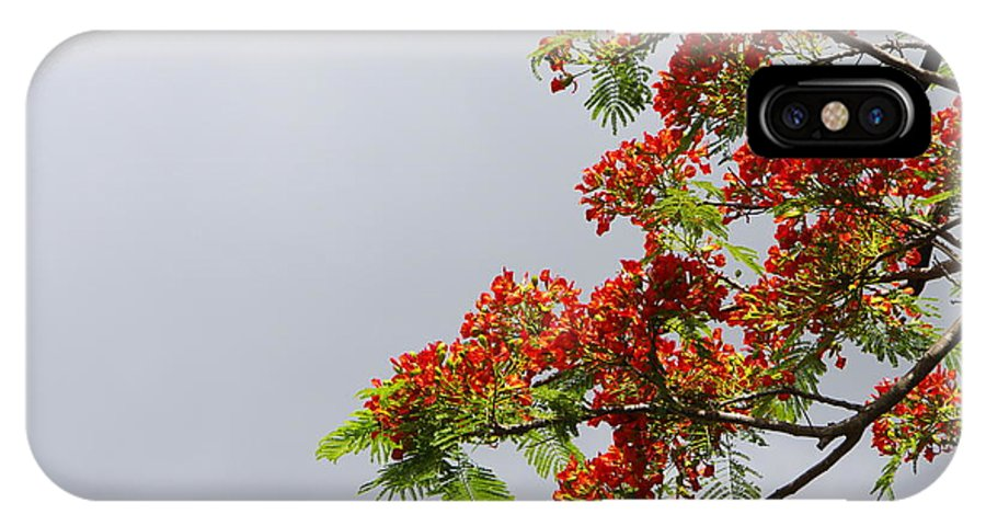 Royal Poinciana Tree IPhone X Case featuring the photograph Royal Poinciana Tree by Marilyn Wilson