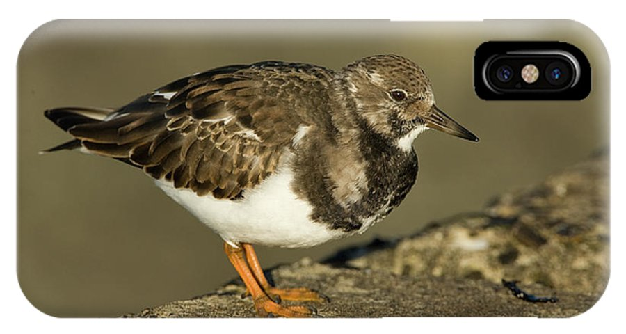 Fn IPhone X Case featuring the photograph Ruddy Turnstone Arenaria Interpres by Jan Sleurink