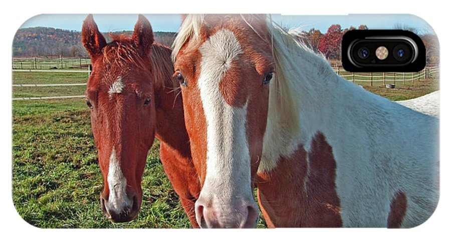 Horses IPhone X Case featuring the photograph Ruff 'n Reddy by S Paul Sahm