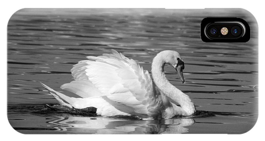 Avian.nature IPhone X Case featuring the photograph Ruffled Feathers by Jack Norton