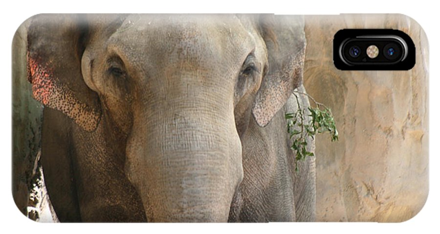 Elephant With Bad Ear IPhone X Case featuring the photograph Sad Elephant by Kym Backland