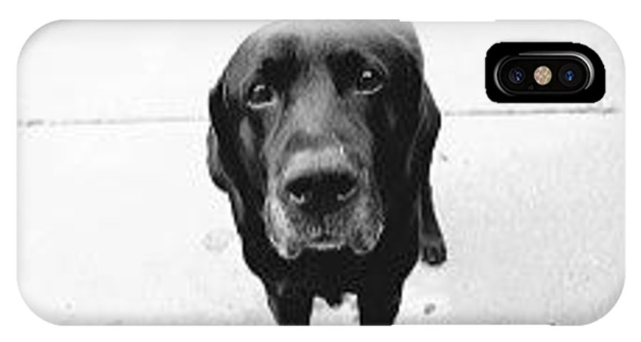 Dogs IPhone X Case featuring the photograph Sad Lab by Lennie Green