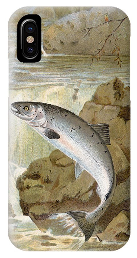 1900 IPhone X Case featuring the photograph Salmon, C1900 by Granger