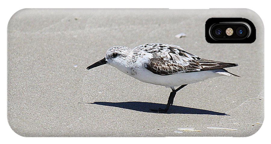 Calidris Alba IPhone X Case featuring the photograph Sanderling On The Beach by Roena King