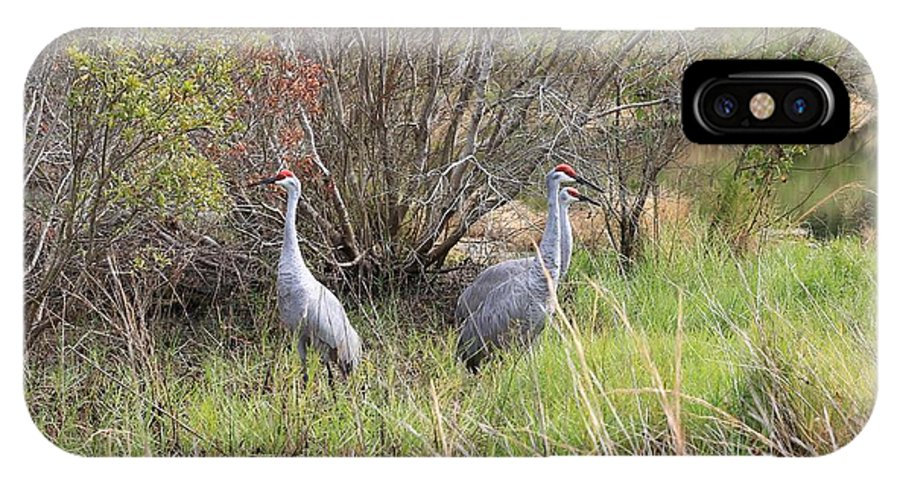 Sandhill Cranes IPhone X Case featuring the photograph Sandhill Cranes In Colorful Marsh by Carol Groenen