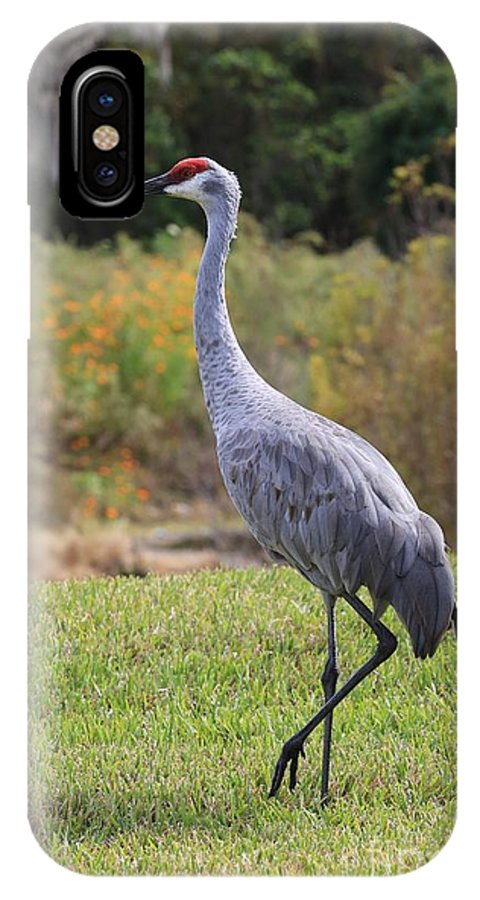 Sandhill Crane IPhone X Case featuring the photograph Sandhill In The Grass With Wildflowers by Carol Groenen