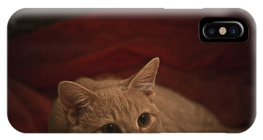 Cats IPhone X Case featuring the photograph Santa Is Coming by Kim Henderson