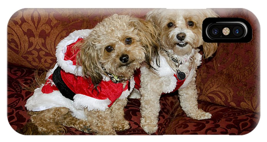 Dog IPhone X Case featuring the photograph Santa Puppies by Jim And Emily Bush