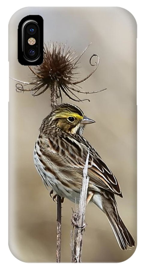 Bird IPhone X Case featuring the photograph Savannah Sparrow by Angie Vogel