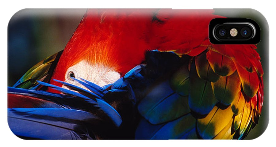 Scarlet IPhone X Case featuring the photograph Scarlet Macaw by Bradford Martin