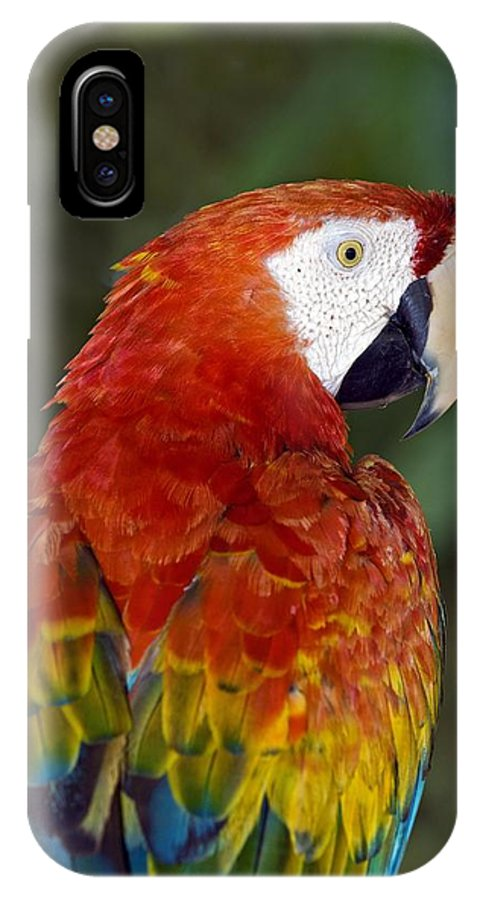 Ara Macao IPhone X / XS Case featuring the photograph Scarlet Macaw by Tony Camacho