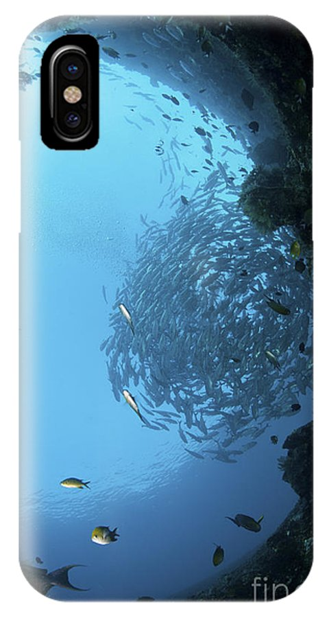 Trevally IPhone X Case featuring the photograph School Of Trevally Seen Through Hole by Mathieu Meur