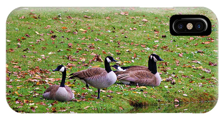 Geese IPhone X Case featuring the photograph Scott Lake Visitation by Jeanette C Landstrom