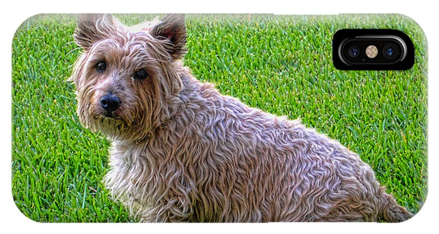 Dog IPhone X Case featuring the photograph Scruffy by Nora Martinez