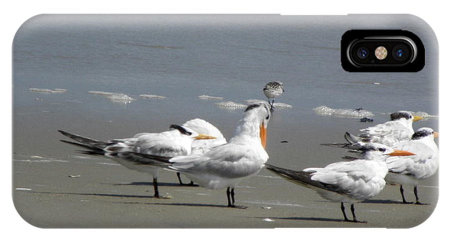 Sea Birds IPhone X Case featuring the photograph Sea Birds Obx Nc by Kim Galluzzo Wozniak