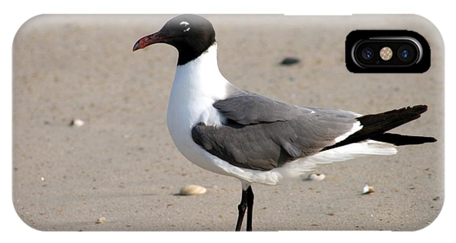 Sea Gull IPhone X Case featuring the photograph Sea Gull Posing For The Camera by Christopher Hignite