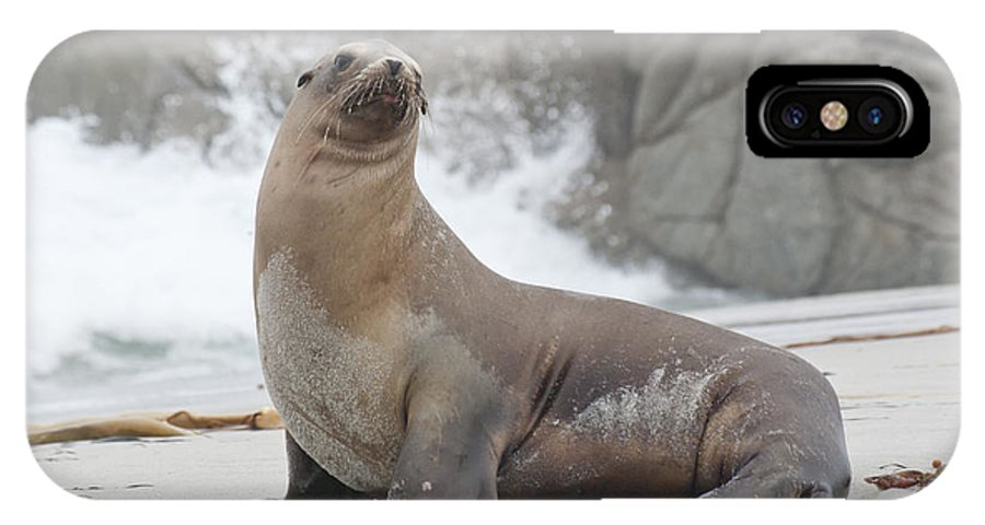 Sea Lion IPhone X Case featuring the photograph Sea Lion Monterey by Jim And Emily Bush