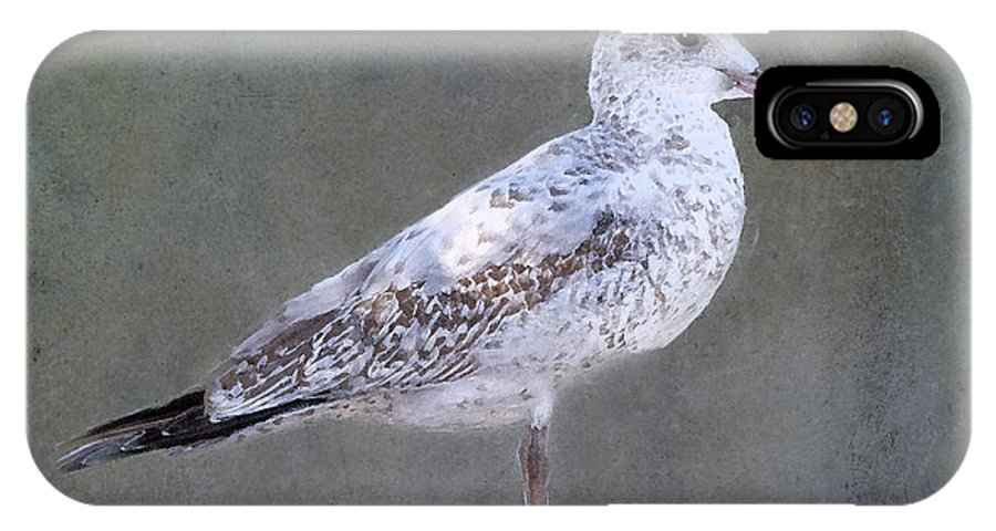 Seagull IPhone X Case featuring the photograph Seagull by Betty LaRue