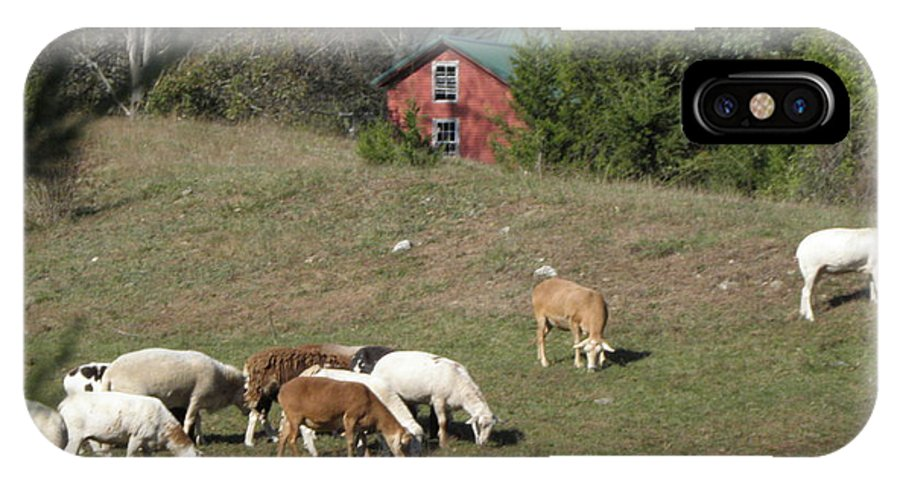 Sheep IPhone X / XS Case featuring the photograph Sheep Grazing by Kim Galluzzo Wozniak