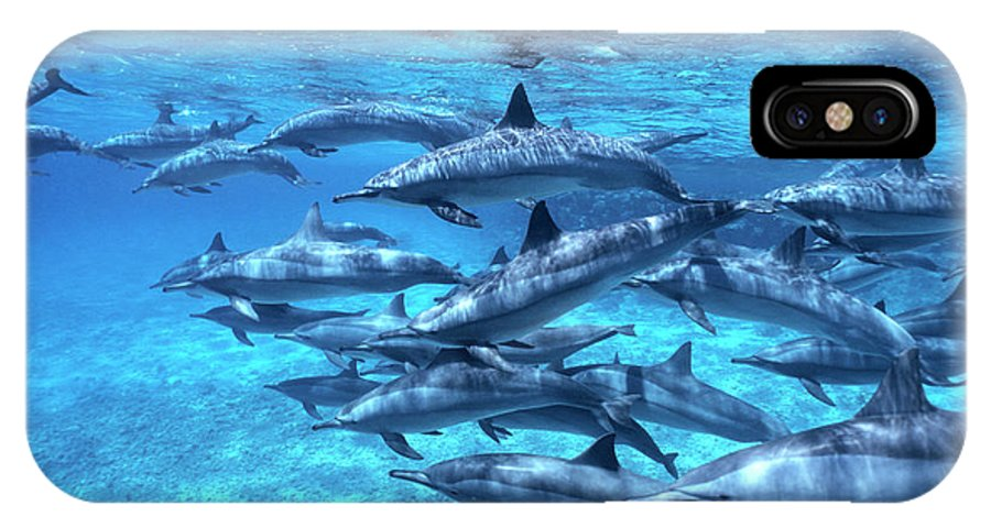 00283200 IPhone X Case featuring the photograph Short-beaked Common Dolphin Delphinus by Hans Leijnse