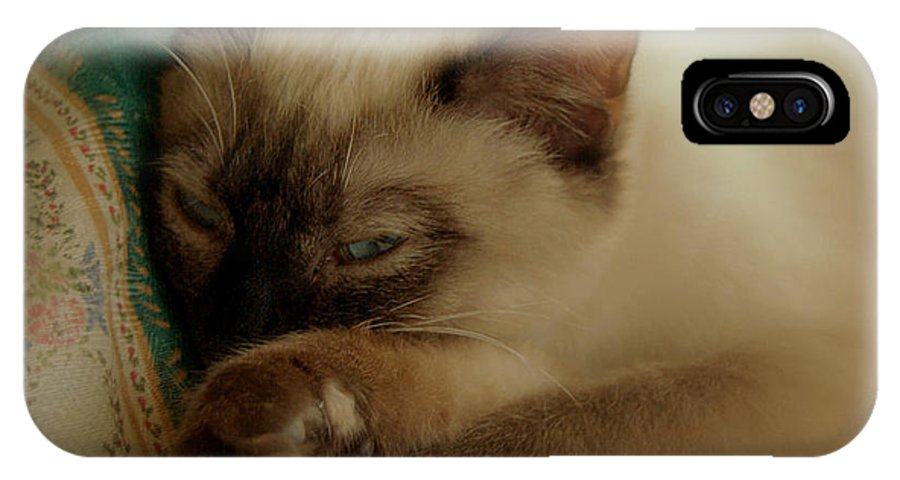 Pets IPhone X Case featuring the photograph Siamese Beauty by Caroline Stella