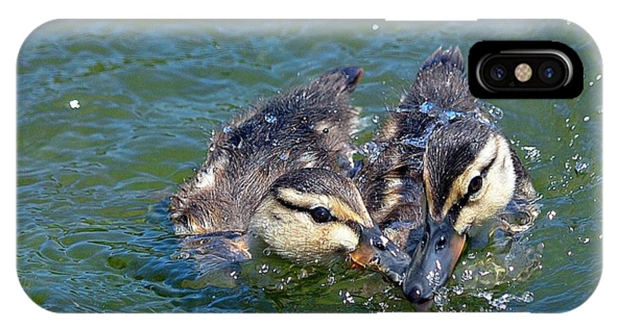 Ducklings IPhone X Case featuring the photograph Sibling Squabble by Fraida Gutovich