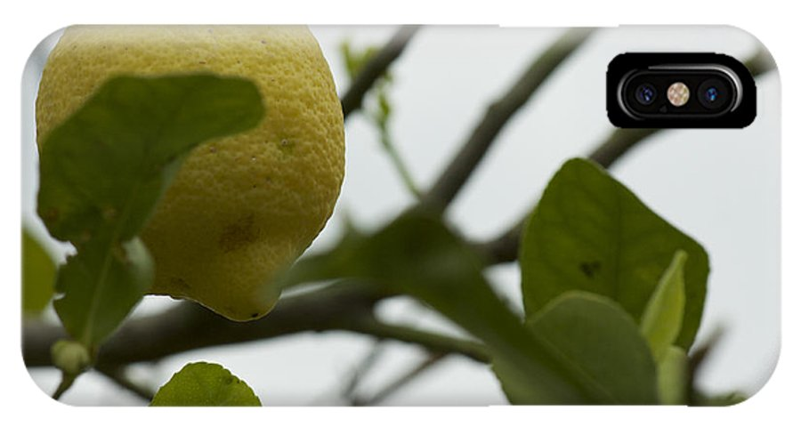 Lemon IPhone X Case featuring the photograph Sicilian's Lemonade by Donato Iannuzzi