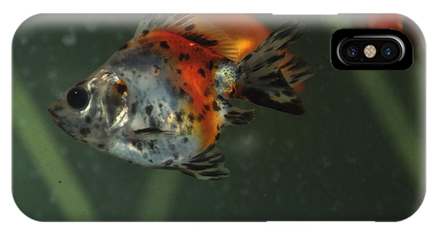 Fish IPhone X Case featuring the photograph Silver Goldfish by Catherine Conroy