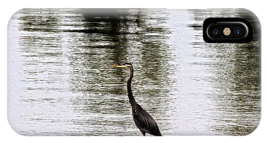 Blue Heron IPhone X / XS Case featuring the photograph Silver Lake by Douglas Barnard