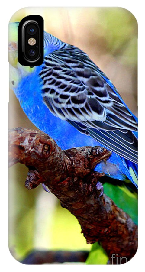 Parakeet IPhone X Case featuring the photograph Singing The Blues by Kathy White