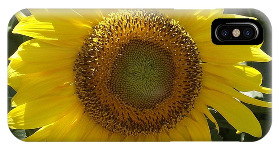 Yellow Sunflower IPhone X Case featuring the photograph Single Sunflower by Michelle Welles