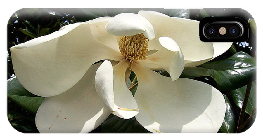 Flowers IPhone X Case featuring the photograph Sleepy Head Magnolia by Gwen Baptiste