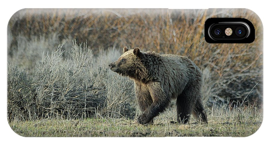Grizzly IPhone X Case featuring the photograph Smelling Something Good by Charlie Choc